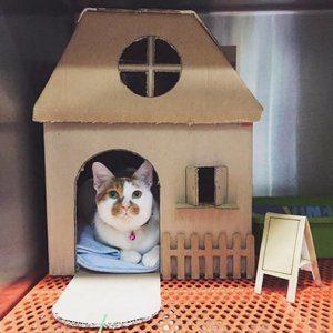 Cara Membuat Kandang kucing dari Kardus Bekas - Jual ...