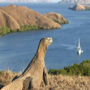 Rute Keliling Jakarta ke Pulau Komodo